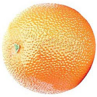 SHAKER REMO FRUIT - ORANGE